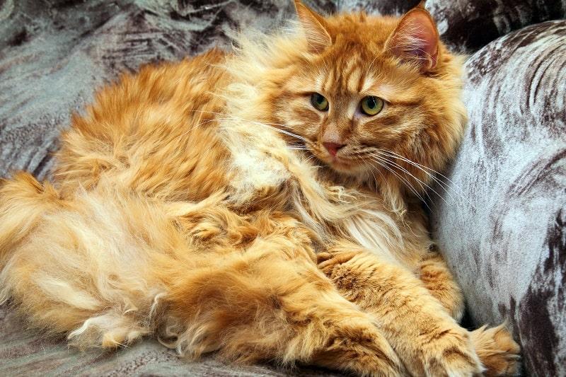 Раствор для матовой кошачьей шерсти