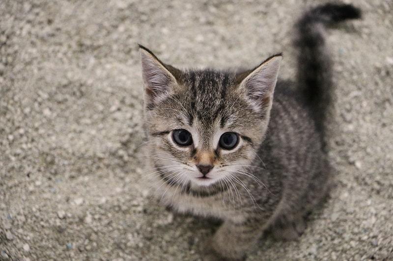Метод треугольника у котенка, страдающего запором