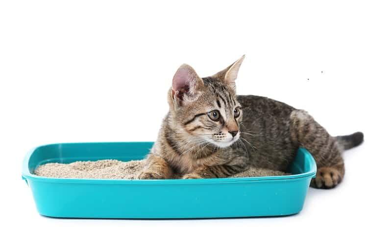 Песок как наполнитель для кошачьего туалета