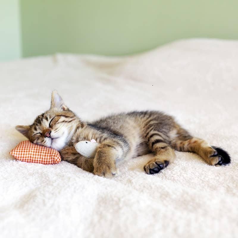 Могу ли я оставить котенка одного на ночь?