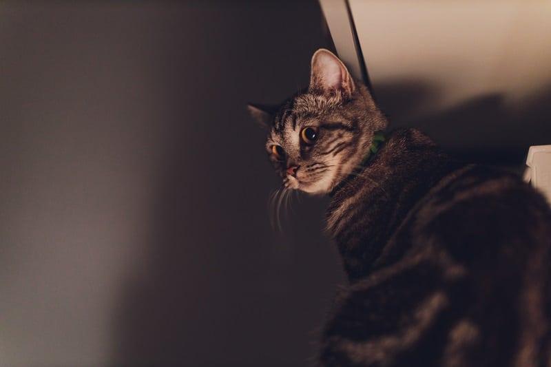 Могут ли кошки бояться темноты?