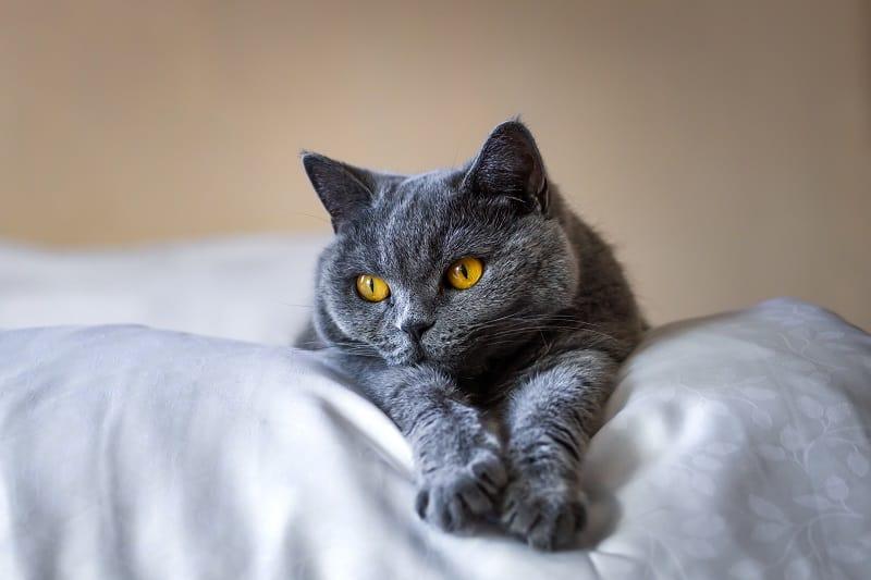 Могут ли кошки быть биполярными