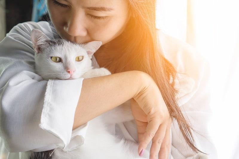 Могут ли кошки чувствовать грусть