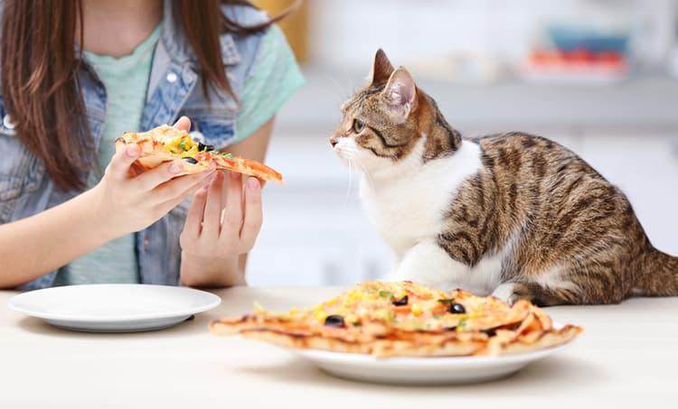 Вы когда-нибудь задумывались, вредна ли пицца для вашей кошки? Прочтите нашу статью, чтобы узнать…