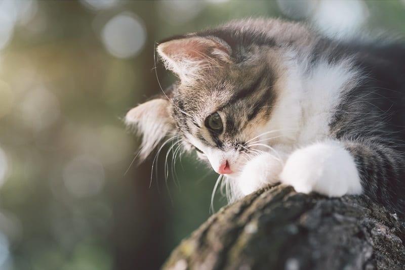 Могут ли кошки лазить по куриной проволоке