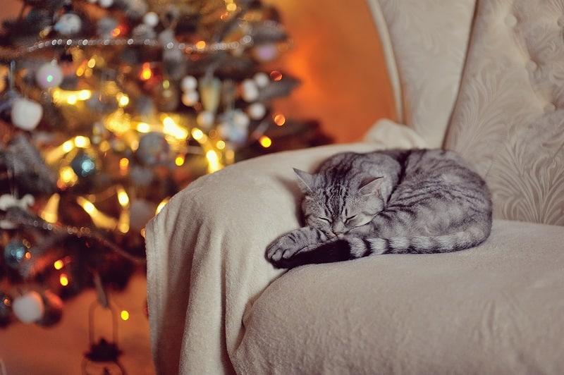 Могут ли кошки получить переохлаждение