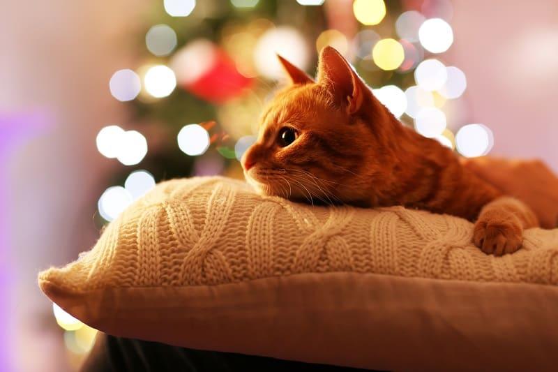 Могут ли кошки смотреть телевизор?