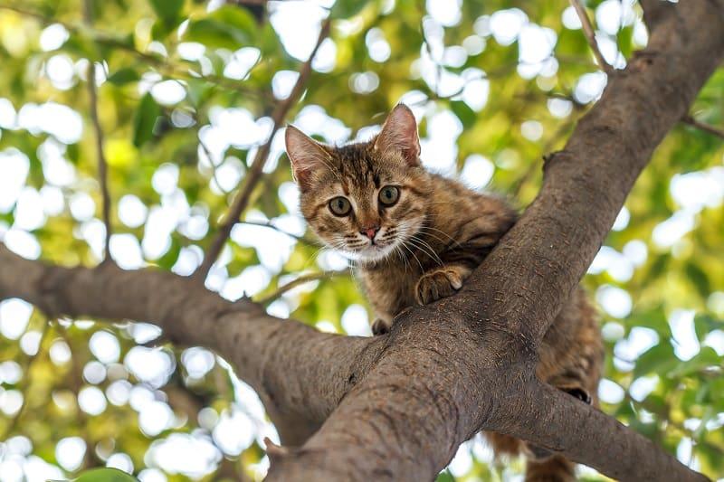 Могут ли кошки видеть инфракрасное излучение?