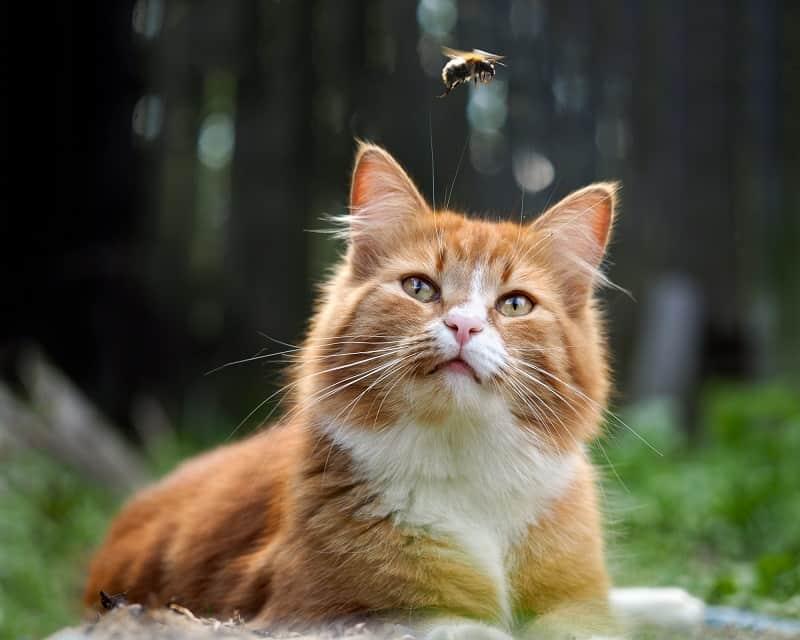 Моя кошка съела муху