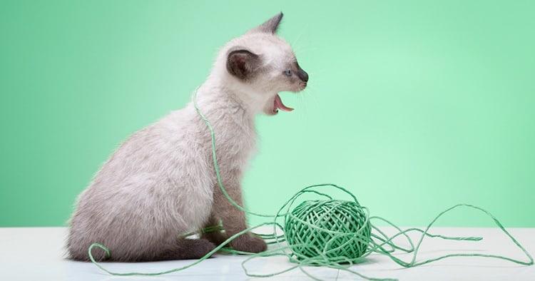 Узнайте, как узнать, проглотила ли ваша кошка веревку, и как справиться с этой стрессовой и потенциально опасной ситуацией.
