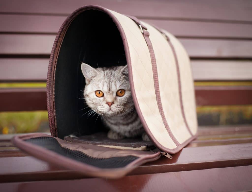 Может ли кошка ездить в машине без переноски