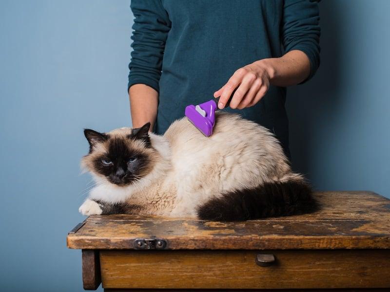 Можете ли вы побрить кошку машинкой для стрижки людей?