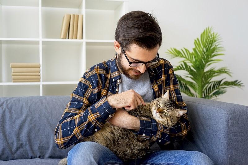Можете ли вы почувствовать микрочип в своей кошке?