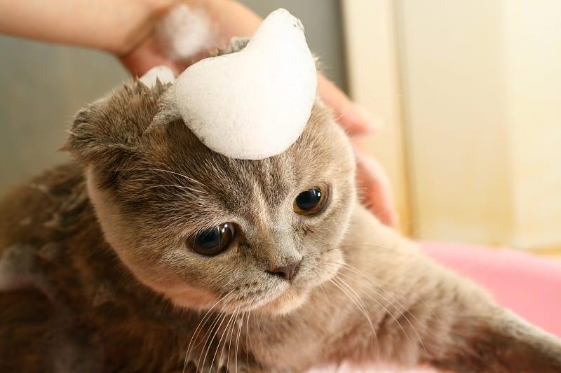 Можно ли использовать детский шампунь для кошек?