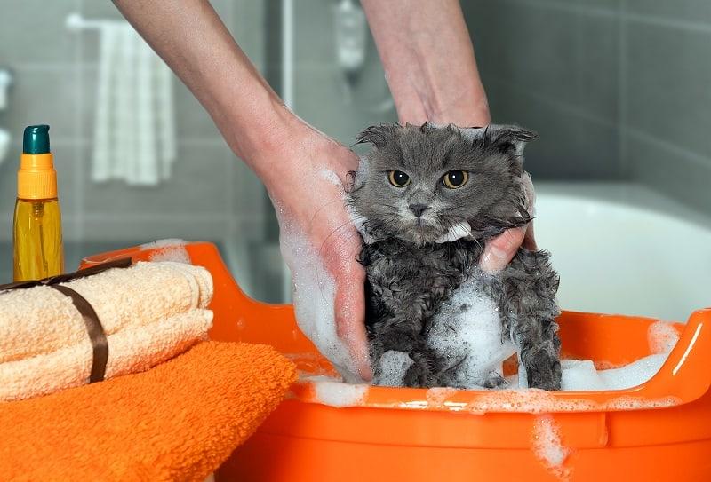 Можно ли использовать шампунь для собак для кошек