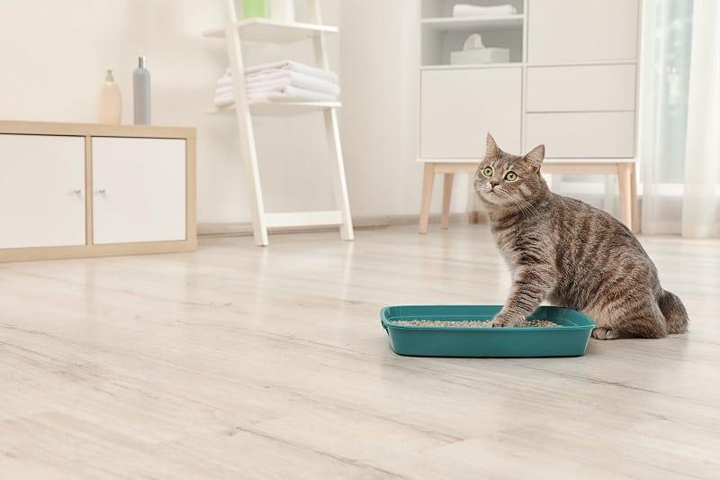 Наполнитель для кошачьего туалета, который не прилипает к лапам