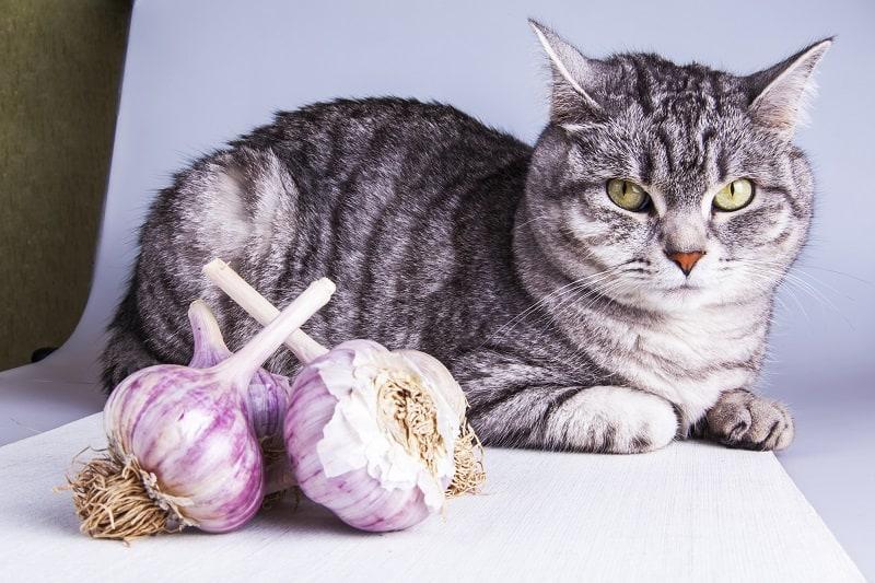 Насколько чеснок токсичен для кошек