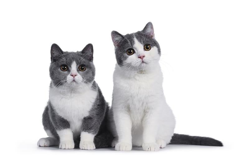 Любят ли кошки запах уксуса