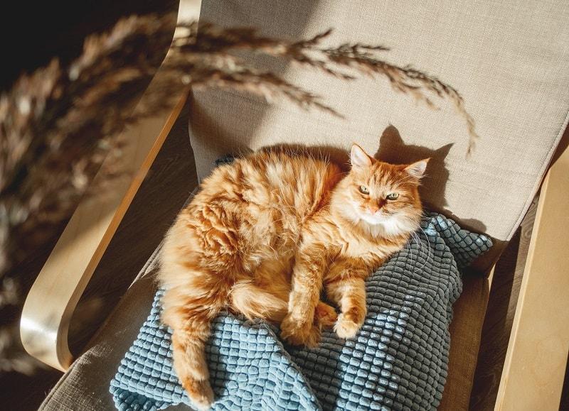 Нужен ли кошкам солнечный свет?