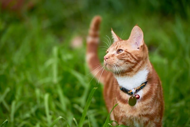 Нужен ли уличным кошкам туалетный лоток?