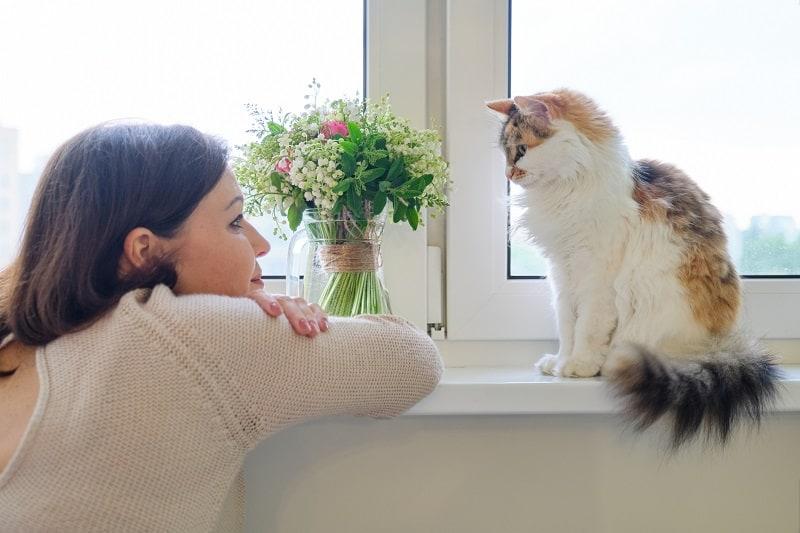 О чем думают кошки