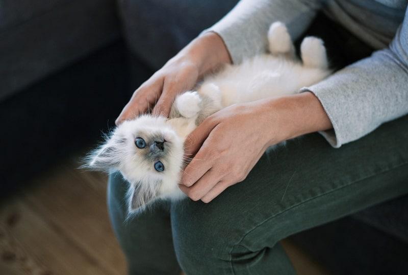 Обязательно ли стричь кошачий коготь