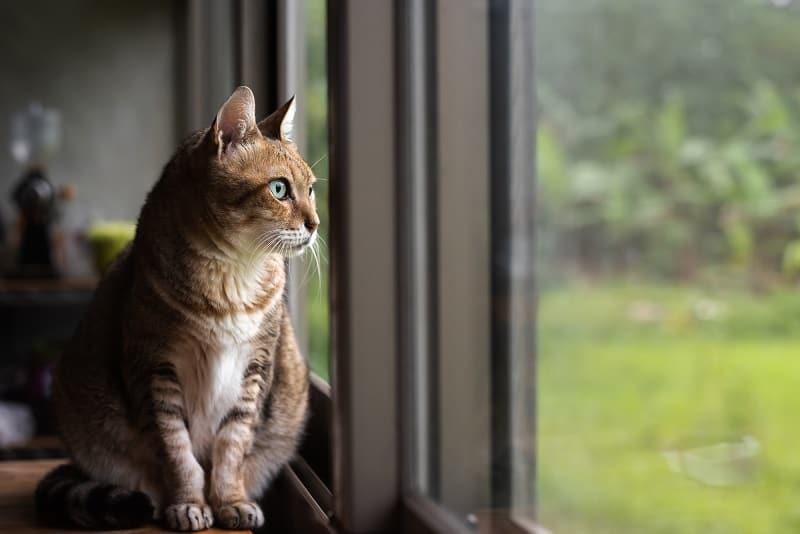 Оставить кошку одну на 3 дня