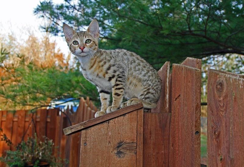 Отпугивают ли кошки змей