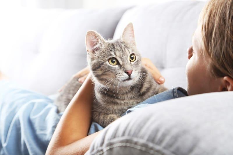 Растут ли кошачьи усы