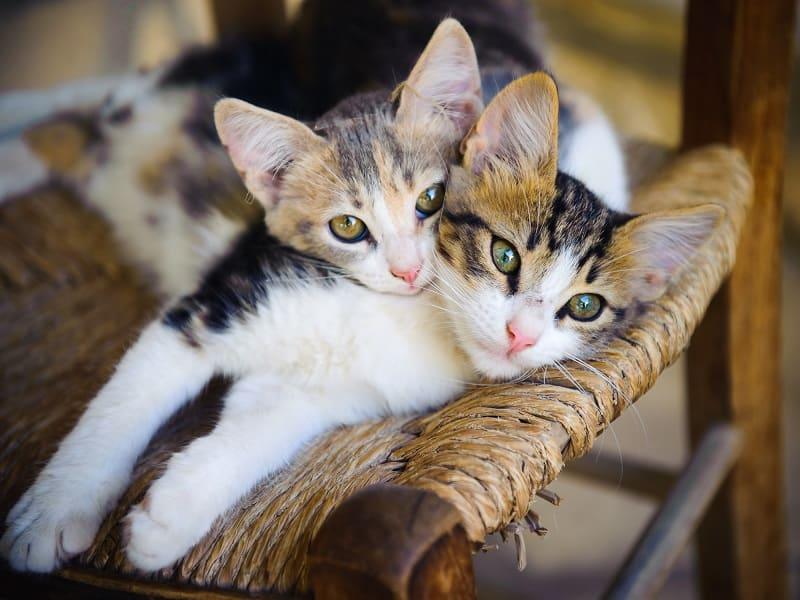 Перемещение с несколькими кошками