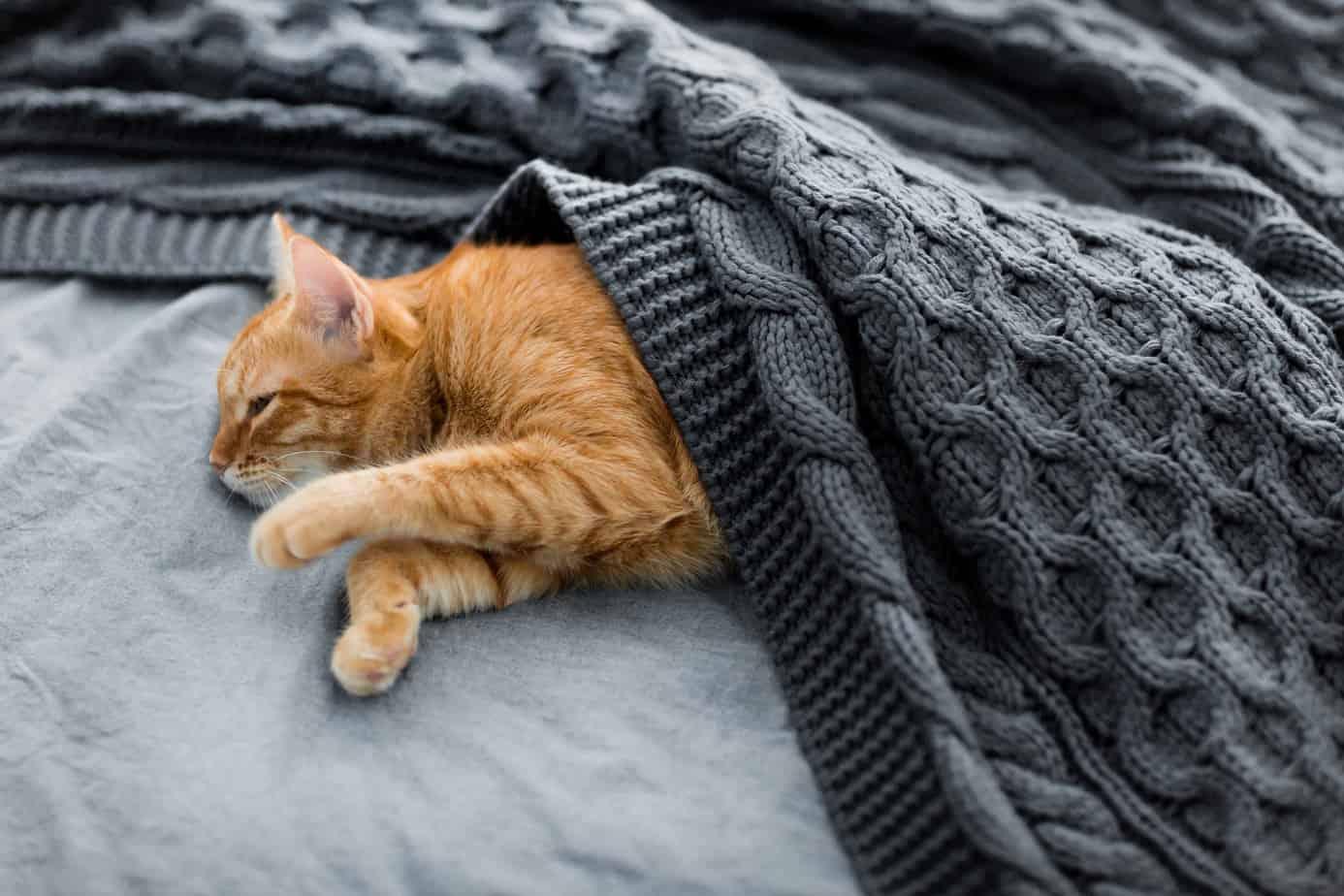 Побочные эффекты микрочипа Cat