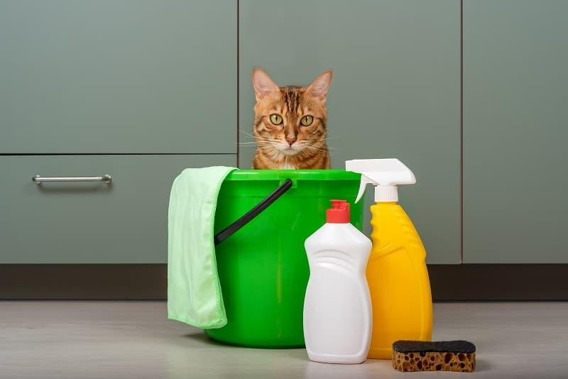 Почему кошкам нравится хлор и каковы риски