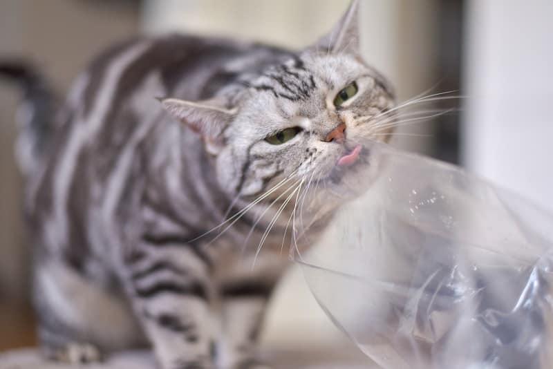 Почему кошкам нравятся пластиковые пакеты?