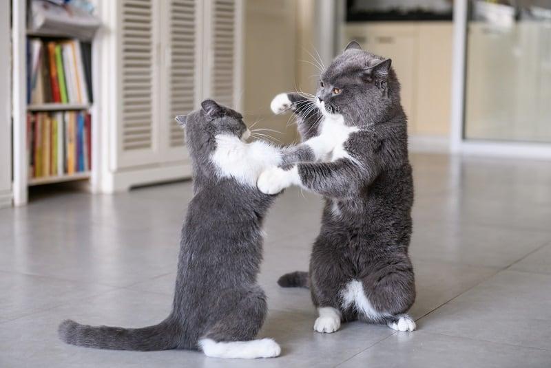 Почему кошки бьют друг друга