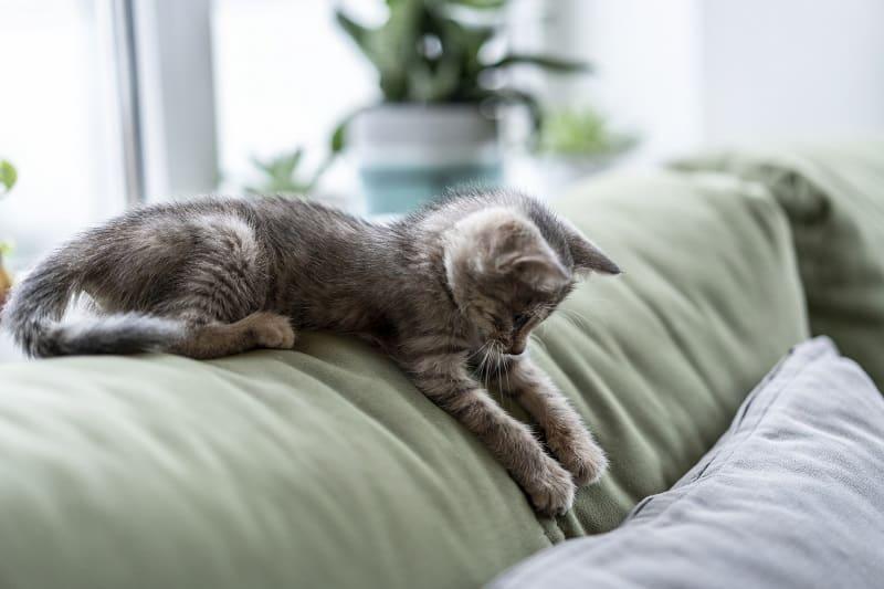 Почему кошки делают маффины