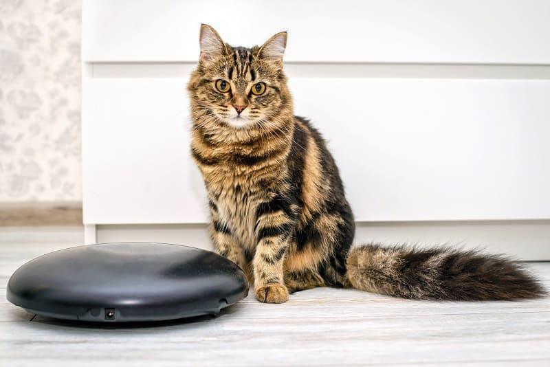 Почему кошки ездят на Roomba