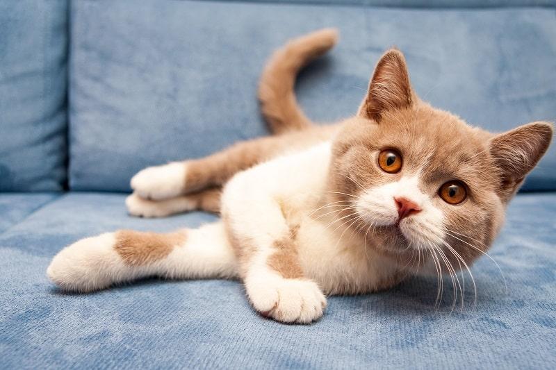 Почему кошки хлопают хвостом, когда лежат