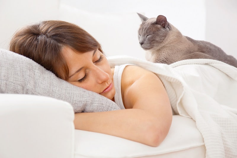 Почему кошки ходят по тебе, пока ты спишь