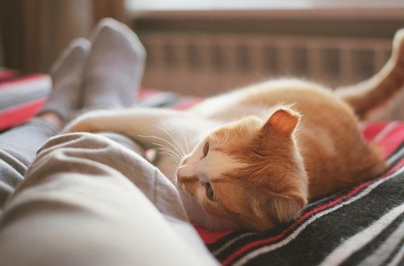 Почему кошки хватаются за ногу?