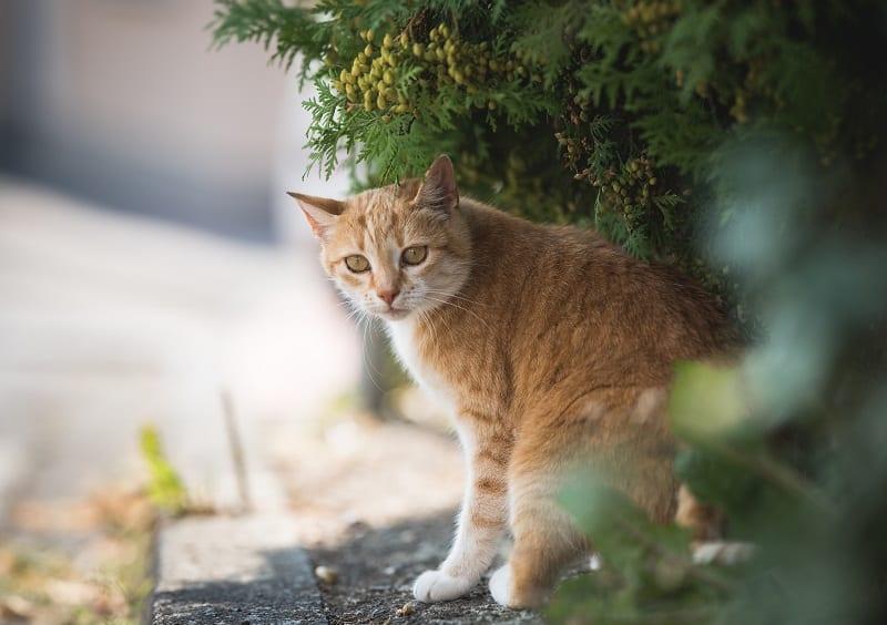 Почему кошки исчезают на несколько дней