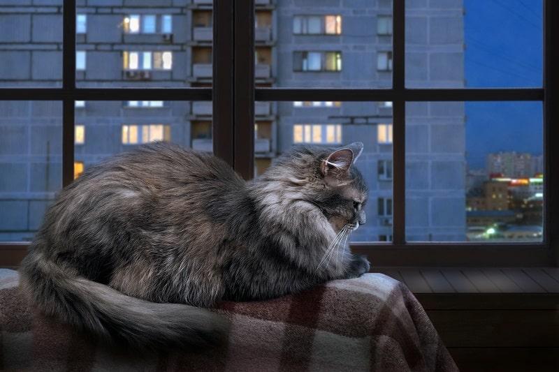 Почему кошки издают по ночам странные звуки
