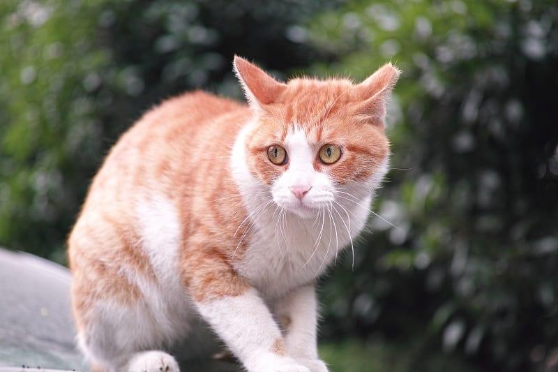 Почему кошки какают, когда напуганы?