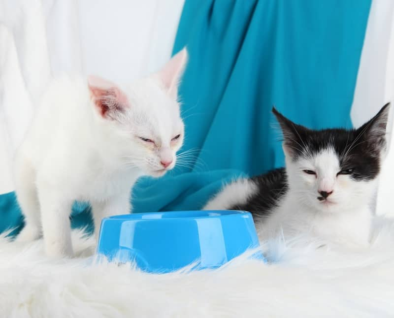Почему кошки лежат рядом с миской для воды