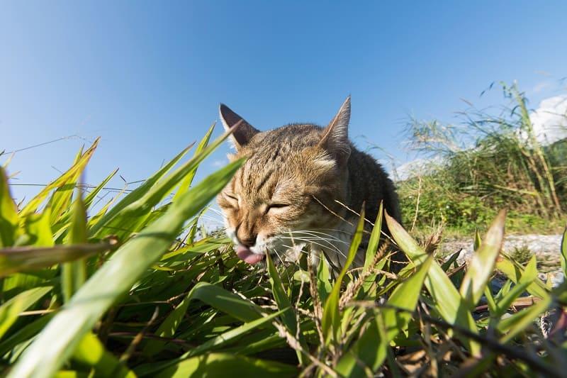 Почему кошки лижут землю