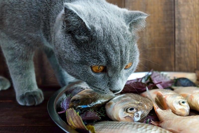 Почему кошки любят рыбу