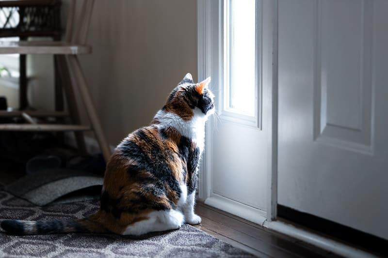 Почему кошки ненавидят закрытые двери