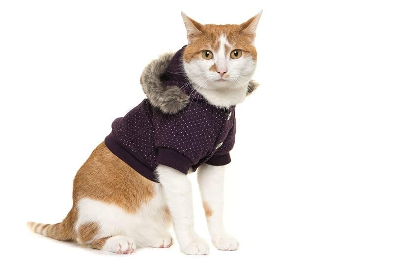 Почему кошка падает, когда вы надеваете на нее одежду