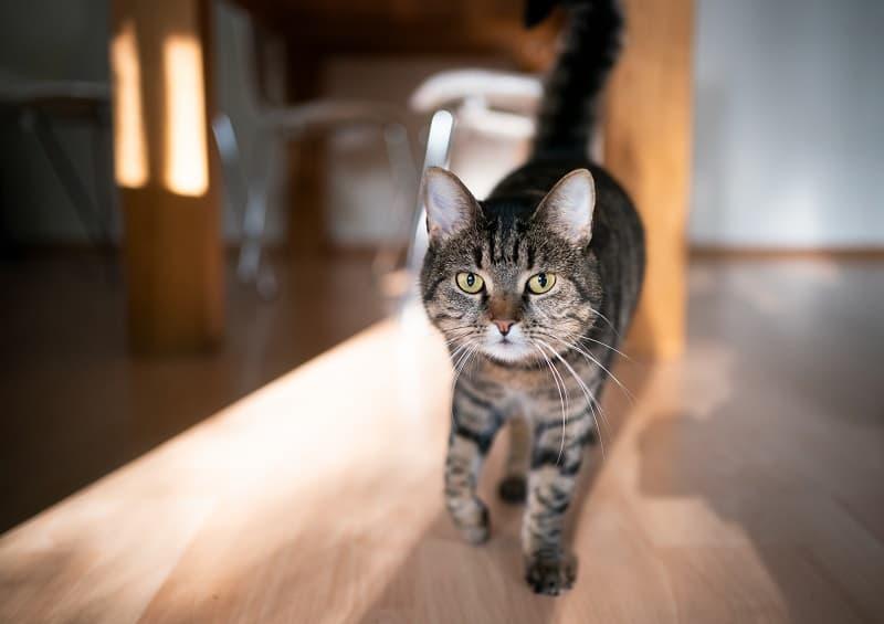 Почему кошки приходят, когда вы насвистываете?