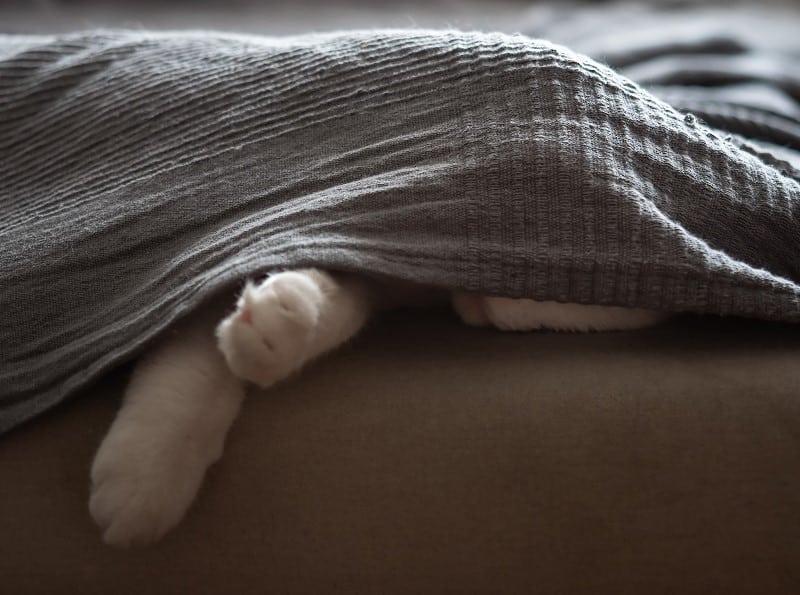 Почему кошки прячутся, когда они больны