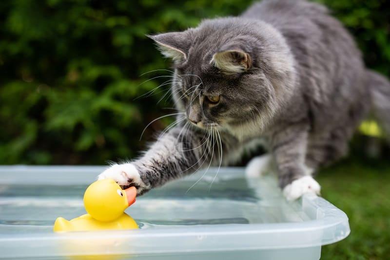 Почему кошки шлепают вещи